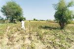Climate change in India: Either adapt or perish in Rajasthan