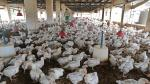 EU ban on non-therapeutic antibiotic use in animals wake-up call for India