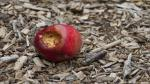 Bacteria from rotten pomegranade can help produce cellulose