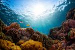 Ocean acidification 'changing' marine biodiversity