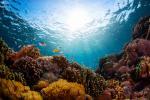 Ocean acidification 'changing' marine biodiversity