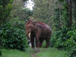Landscape-level approach necessary to address human-elephant conflicts