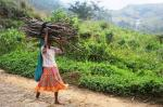 Forest dwellers' rights: Conservationists started it, SC stayed it