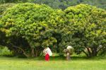 Himachal's fodder management initiative can help save lives of rural women