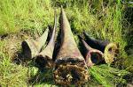 We asked people in Vietnam why they use rhino horn. Here's what they said