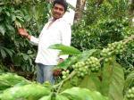 अतिशय मौसम सेभारत में कॉफी का उत्पादन घटा