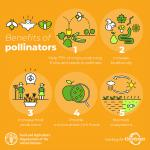 Vital roles bees and other pollinators play in food chain
