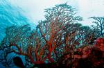 Engage local communities to protect marine life: Study