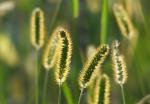 वैज्ञानिकों ने खोजा, पौधे कैसे लेते हैं सांस और हमें कैसे हो सकता है फायदा