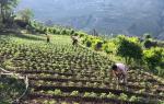 अच्छी खेती के लिए निवेश जरूरी, जीरो बजट खेती संभव नहीं
