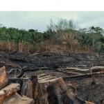 दुनिया की 70 फीसदी वन भूमि के खराब होने का खतरा : यूएनसीसीडी