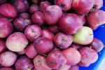 उत्तराखंड के हर्षिल सेब को लगी बीमारी, 80 प्रतिशत सेब खराब