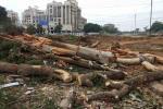 भोपाल की हरियाली को खतरा, विधायक आवास के लिए काटे जा रहे हैं 1000 पेड़
