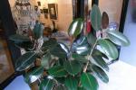 घर और दफ्तर में रखे पौधे हवा को साफ नहीं करते : अध्ययन