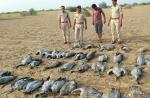 कच्छ में भी प्रवासी पक्षियों की मौत, सांभर में एसडीआरएफ ने संभाली कमान