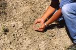 वैज्ञानिकों ने बनाया एआई बेस्ड नया सेंसर, किसानों के लिए साबित हो सकता है वरदान