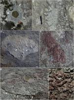 वनस्पति शास्त्रियों ने खोजा 38 करोड़ साल पुराना जंगल