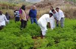 केवल 2 रुपए की लागत से तैयार होगा यह पौधा, कीमती तेल बनाने का आता है काम