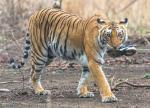 उत्तराखंड में जंगली जानवरों के हमले से 58 लाेग मरे