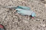 झारखंड में बेमौत मर रहे हैं पक्षी, 15 दिन बाद पता चलेगा कारण
