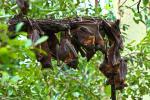 दुर्लभ चमगादड़ों की संख्या में तेजी से गिरावट