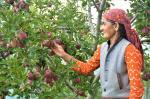 दो दशक में 46 से 12% हुई हिमाचल की जीडीपी में कृषि-बागवानी की हिस्सेदारी