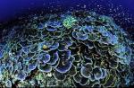 प्रकृति की इस अद्भुत प्रजाति को नुकसान पहुंचा रहा है माइक्रोप्लास्टिक : शोध