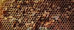 Not so sweet: Honey production falls 40% in Bihar
