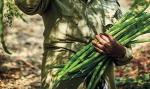 जानें, मोरिंगा के पेड़ की खासियत और बनाएं फूलों की सब्जी