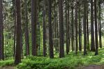 लंबे समय तक जीवित रहने वाले पेड़ निभाते हैं कार्बन भंडारण में बड़ी भूमिका