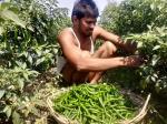 फल और सब्जी किसानों को नहीं मिल रहे खरीदार, फसल फेंकने की नौबत