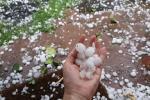 हिमाचल में ओलों के बड़े आकार से किसानों का नुकसान बढ़ा