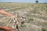 मौसम की मार: 5 साल में 8,723 की मौत, 14.796 करोड़ हेक्टेयर क्षेत्र में लगी फसलों का नुकसान