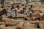 पर्यावरण अपराध: लंबित मामलों को निपटाने में लग जाएंगे 33 साल