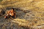 खोज: बढ़ते तापमान का गेहूं के उत्पादन पर नहीं पड़ेगा फर्क