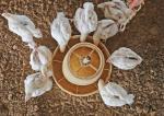 पक्षियों के मल में ऐसे रोगाणु पाए जा रहे हैं जिन पर नहीं हो रहा एंटीबायोटिक का असर