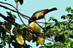 आक्रामक विदेशी प्रजातियां वैश्विक जैव विविधता के लिए नुकसानदायक: अध्ययन