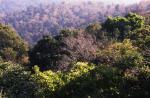 वन क्षेत्र में वृद्धि वाले दस देशों में भारत भी शामिल: एफएओ
