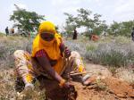 बंजर जमीन को आबाद कर रही हैं महिलाएं