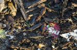Food wrappers overtake cigarette butts as beach litter: Report