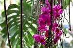 40 फीसदी पौधों पर मंडरा रहा है विलुप्त होने का खतरा