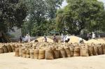 उत्तर प्रदेश में 2 फीसदी से भी कम हुई धान की सरकारी खरीद, किसान हताश