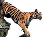 क्या भारत में चीन से आए थे बाघ?