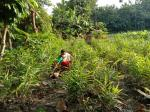 COVID-19 warriors: How Assam's Mishings brought agroforestry back into practice