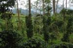 पौधों में अधिक विविधता होने से कीटनाशकों का उपयोग हो जाता है कम : शोध