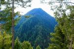 किस प्रकार के जंगल सबसे अधिक कार्बन करते हैं स्टोर, वैज्ञानिकों ने लगाया पता