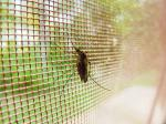 Progress against malaria continues to plateau: Report