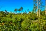 पीटलैंड संरक्षण जलवायु परिवर्तन से निपटने के लिए जरूरी : शोध