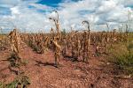 जलवायु परिवर्तन से निपटने के लिए धीमी गति से किए जा रहे कार्यों पर संयुक्त राष्ट्र के पूर्व सदस्य नाखुश