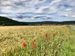 Plant diversity rapidly declining in Germany